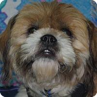 Adopt A Pet :: Milo - Longview, WA