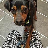Adopt A Pet :: Jimmy - Franklinville, NJ