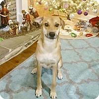 Adopt A Pet :: LUNA - Minnesota, MN