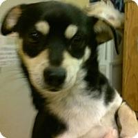 Adopt A Pet :: Denny - Abilene, TX