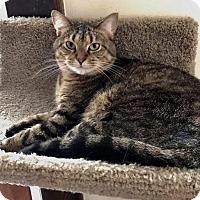 Adopt A Pet :: Bailey - Columbus, OH