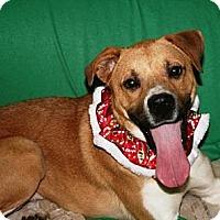 Adopt A Pet :: Zoe - Covington, KY