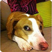 Adopt A Pet :: Peanut - kennebunkport, ME