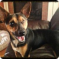 Adopt A Pet :: Odie - Homewood, AL