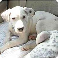 Adopt A Pet :: Nugett - Milwaukee, WI