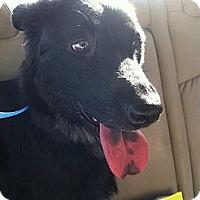 Adopt A Pet :: Ember - New Boston, NH