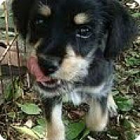 Adopt A Pet :: MacFearsome - Brattleboro, VT