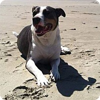Adopt A Pet :: Daisy - Tillamook, OR