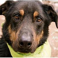 Adopt A Pet :: Colt - Lago Vista, TX