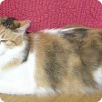 Adopt A Pet :: Tozy - Davis, CA
