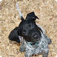 Adopt A Pet :: Freckles - Ormond Beach, FL