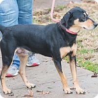 Adopt A Pet :: Batman - Elmwood Park, NJ