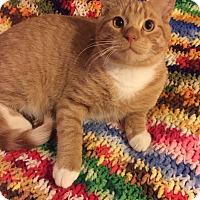 Adopt A Pet :: Parker - Addison, IL