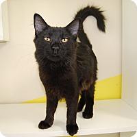 Adopt A Pet :: Reid - Ridgway, CO