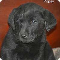 Adopt A Pet :: Popsy - Glastonbury, CT