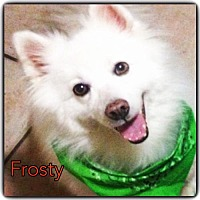 Adopt A Pet :: Frosty of Miami, Florida - Bradenton, FL
