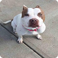Adopt A Pet :: CARLOS - Canfield, OH
