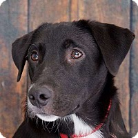 Adopt A Pet :: Hank - Sudbury, MA