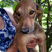 Adopt A Pet :: Kashmir - Medora, IN