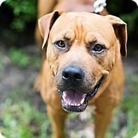 Adopt A Pet :: Max - Houston, TX