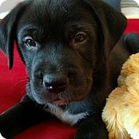 Adopt A Pet :: Julie - Knoxville, TN