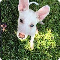 Adopt A Pet :: Addison - Sugar Land, TX
