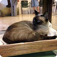 Adopt A Pet :: isabella - Gadsden, AL