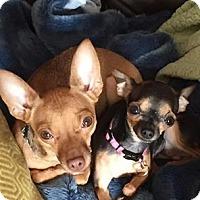 Adopt A Pet :: Maka & Mia - Verona, NJ