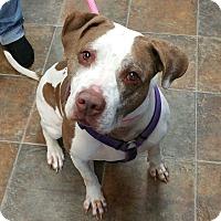 Adopt A Pet :: Heather - Lisbon, OH