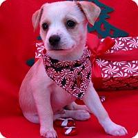 Adopt A Pet :: John - Irvine, CA