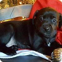 Adopt A Pet :: Gracie - Champaign, IL