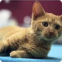 Adopt A Pet :: Lake - Chicago, IL