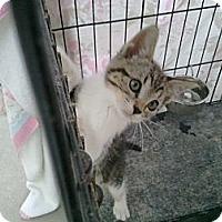 Adopt A Pet :: Bobbie - Brea, CA