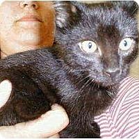 Adopt A Pet :: Baloo - Proctor, MN
