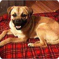 Adopt A Pet :: Lenny - Seattle, WA