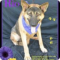 Adopt A Pet :: Rio - Plano, TX