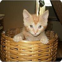 Adopt A Pet :: Benny - Morris, PA