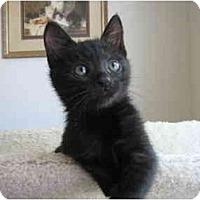 Adopt A Pet :: Poppy - Irvine, CA