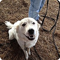 Adopt A Pet :: Appy - Stilwell, OK