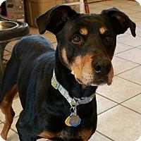 Adopt A Pet :: Sophie - New Richmond, OH