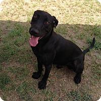 Adopt A Pet :: Raz - Lufkin, TX