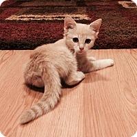 Adopt A Pet :: Tweety - Berkeley Hts, NJ