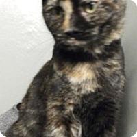 Adopt A Pet :: Trixie - Keokuk, IA
