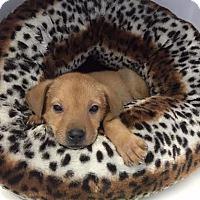 Adopt A Pet :: lucas - EDEN PRAIRIE, MN