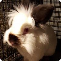 Adopt A Pet :: Nelson - Conshohocken, PA