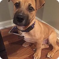Adopt A Pet :: Mario-Adopted! - Detroit, MI