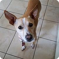 Adopt A Pet :: Bailey CP in RI - Providence, RI
