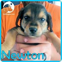 Adopt A Pet :: Newton - Novi, MI