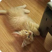 Adopt A Pet :: Sullivan - Fullerton, CA