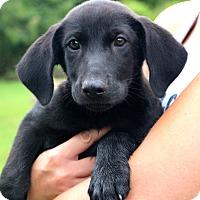 Adopt A Pet :: Arlena~adopted!! - Glastonbury, CT